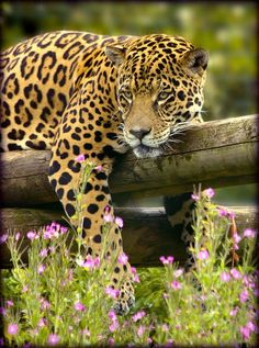 Wow...That leopard has some deep thoughts