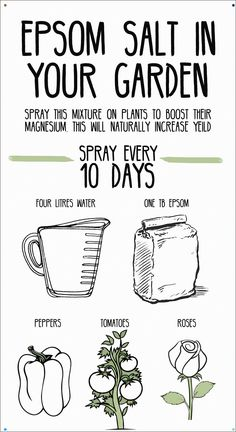 Spraying epsom salt on plants boosts magnesium supply to plants and increases yield. Spraying epsom salt on plants boosts magnesium supply to plants and increases yield. Monina my plants […] plants vegetable garden Growing Tomatoes, Growing Plants, Growing Vegetables, Easiest Vegetables To Grow, Growing Green Beans, Growing Peppers, Garden Yard Ideas, Lawn And Garden, Garden Landscaping