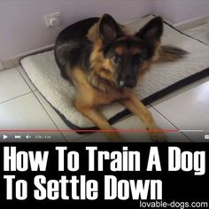 "Please Share This Page: Photo – www.youtube.com/watch?v=FRM0LeSBjxA This video by Training Positive is a very helpful and easy-to-grasp training tutorial on the topic of getting your dog to settle. Some dogs are naturally hyperactive and this technique should help to get the dog more disciplined. This might seem to be a simple ""trick"" but it …"