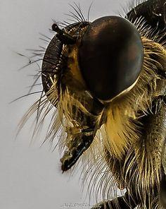 Portrait - Portrait Alien Life Forms, Beautiful Creatures, Make Me Smile, Hummingbirds, Portrait, Bats, Photographs, Amazing, Nature