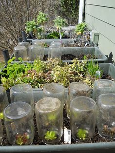 Mason Jar Greenhouses - 10 of the Best Mason Jars DIY Ideas