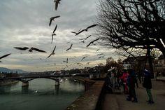 Feeding Birds, Basel, Bird Feeders, Switzerland, Kids, Photography, Toddlers, Fotografie, Boys