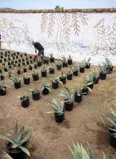 Stefan Tischer: workshop LandWorks Sardinia 2013