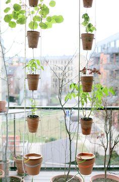 Window Farming in Copenhagen by Jakob Lange, partner, BIG Architects. #allgoodthings #danish
