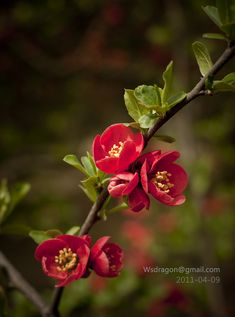 Different types of flowers with names, meanings and types of flowers with pictures Bloom Blossom, Blossom Flower, Flower Art, Flowers Nature, Spring Flowers, Flowers Perennials, Planting Flowers, Flor Magnolia, Different Types Of Flowers