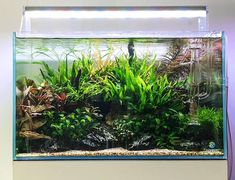 Planted Aquarium, Live Aquarium Plants, Nature Aquarium, Aquarium Ideas, Takashi Amano, Tanked Aquariums, Luz Led, Aquatic Plants, Plant Sale