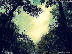 hearts in nature | Heart Nature by AldoVl on deviantART