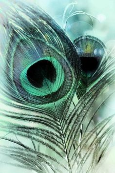 Peacock Photograph - Blue Lagoon by Darlene Kwiatkowski Peacock Wallpaper, Colorful Wallpaper, Wallpaper Backgrounds, Peacock Painting, Peacock Art, Peacock Feathers, Peacock Colors, Feather Photography, Nature Photography