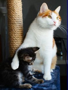 Awww! 2 cats... I insist... I love cats too!! they´re adorable pets!