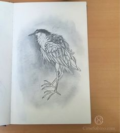 #sketch #animal #art #bird