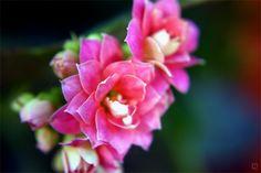 flower-38 by josgoh