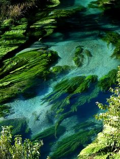Clear waters of Te Waihou River in North Island, New Zealand