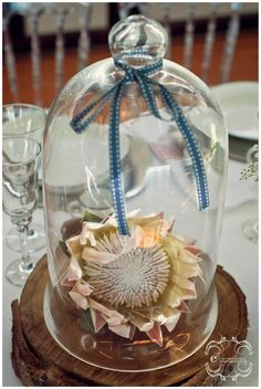 We heart Proteas My Flower, Flowers, Bloom Where You Are Planted, Something New, March 2013, Snow Globes, Flower Arrangements, Cape, Aquarium