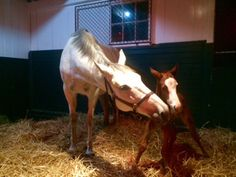 Winter Memories and her new colt by Tapit 1/18/17