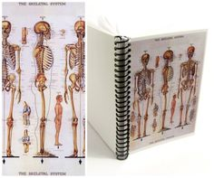 Skeletal Spiral Notebook 4 x 6 by Ciaffi on Etsy, $12.50