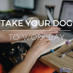 A celebration of the companionship between canine and human #NationalTakeYourDogToWorkDay hopes to inspire others to adoptions from shelters and humane societies! #dogs #dogsofinstagram #loans #mortgage #teamhomeloans #sandiego #fundit
