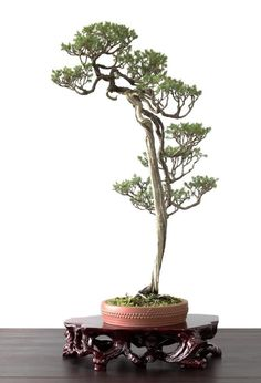 Foto: Bonsai ClMore Pins Like This At FOSTERGINGER @ Pinterest