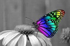 Bildergebnis für Schmetterling