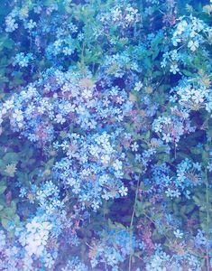 Botanical Inspo | Justina Blakeney Est. 1979