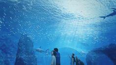 Time lapse du Chantier Grand Nausicaà Public Aquarium in France Aquarium Led, Led Aquarium Lighting, Marine Aquarium, Nausicaa, Fresh Water, Public, France, French