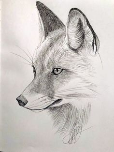 Fox, micron sketch by Margaret Dean – Art Sketches Realistic Animal Drawings, Pencil Drawings Of Animals, Realistic Sketch, Art Drawings Sketches Simple, Cute Drawings, Drawing Ideas, Animal Sketches Easy, Beautiful Pencil Sketches, Fox Drawing