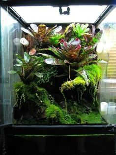 Image result for creating a planted vivarium for crested gecko