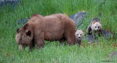 Petition · Protect grizzly bears by banning the trophy hunt in BC · Change.org