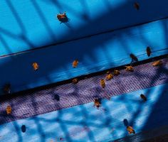 Bees returning to their hive Host A Party, Bees, Entertaining, Country, Rural Area, Country Music, Rustic