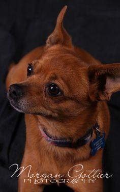 Photography in Reno Animal Photography, Pets, Animals, Animales, Nature Photography, Animaux, Animal Pictures, Animal, Animais
