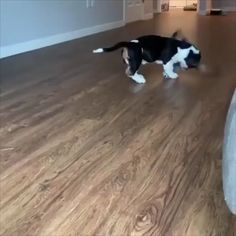 Funny puppy video funny dog video funny pets video the music makes it funny animals puppy doglovers cutepuppy cutedogs s luchtstroom naar voor Funny Animal Memes, Funny Animal Videos, Cute Funny Animals, Funny Animal Pictures, Cute Baby Animals, Funny Dogs, Animals And Pets, Funny Babies, Cute Puppies