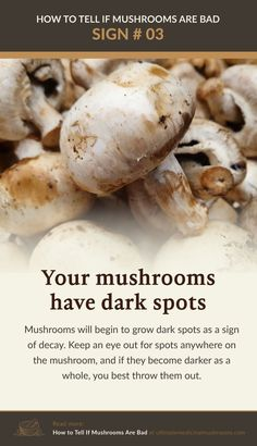 If you notice your mushrooms have developed darkspots while in storage, it may be a clear sign that it has gone bad. Dark spots on fresh mushrooms are a sign of decay and if you noticed the whole mushroom has gone completely dark, discard it immediately. | Discover more about medicinal mushrooms at ultimatemedicinalmushrooms.com