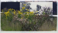 secret article hidden by hundred wunders: the high line project for the lifeline of New York