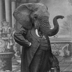 Grand Ole Bestiary, Retro Style Prints of Anthropomorphic Animal Heads on Human Bodies Elephant Head, Elephant Love, Elephant Pants, Vintage Elephant, White Elephant, Old Photos, Vintage Photos, Antique Photos, Portraits Victoriens