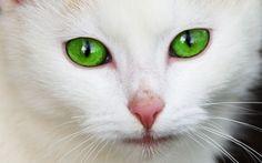 Do czego kotu potrzebne są oczy?