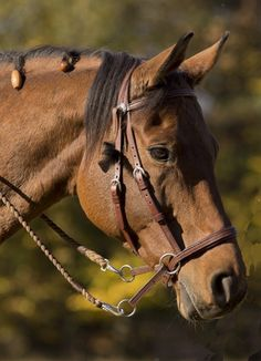 Bitless Bridle Leather WESTERN STYLE