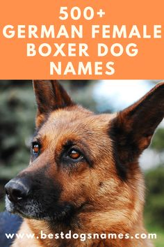 German Female Boxer Dog Names Source by steviepillars The post German Female Boxer Dog Names appeared first on FM Pups. Brindle Boxer Puppies, Boxer Puppies For Sale, Boxer Dog Breed, Boxer Dog Names, Dog Names Male, Female Boxer Dog, Dogs Names List, Dog Hotel, Cute Dog Pictures