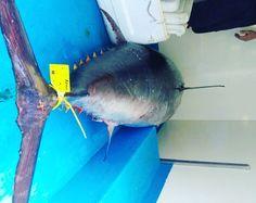 Atún rojo patudo #restaurante #atún #bueno #chef #canarias #fish #food #foodie #fishing #foodlovers #gastronomia #instafood #instagood #instagram #lovefood #porn #redtuna #restaurant #restaurante #spain #tuna #tartar #tataki #tenerife by mesoncastellano