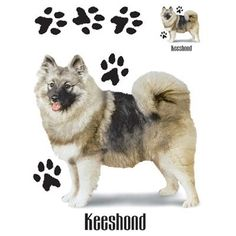 Keeshond Dog Image T Shirt 100% Cotton Women's New Style and Cut Tee Size M L XL 2XL Free Shipping