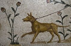 Dog mosaid, Bardo Museum, Tunis by cmccloskey56, via Flickr
