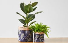 See my favourite super cute Indoor Plant Holders including ceramic, bamboo and even fabric materials spotted at the Top Drawer Spring / Summer 2017 trade show. Succulent Pots, Planter Pots, Succulents, Fabric Birds, Fabric Flowers, Potted Plants, Indoor Plants, Herb Labels, Terracotta