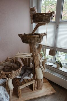 Satisfied purring - natural wooden trees for cats cat playground - cats - Happy purring natural wood trees for cats cat playground - Cat Playground, Natural Playground, Playground Ideas, Diy Cat Tree, Cat Trees, Cat Enclosure, Cat Room, Wooden Tree, Outdoor Cats
