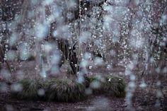 Primavara+din+Japonia,+in+cele+mai+frumoase+poze+