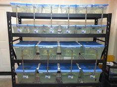 Fish Breeder Fry Rack - 210 Gallon - Aquarium Fish Tank