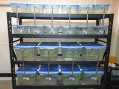 1000 images about fishrooms on pinterest fish breeding for Racks fish house