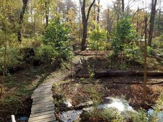 Make the Most of Your Woods With Forest Farming – Nature and Environment – MOTHER EARTH NEWS