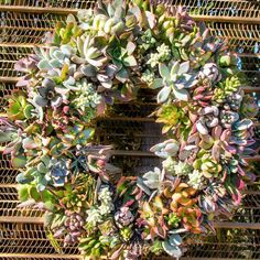 Succulent Wreaths! Cactus Jungle Nursery and Garden in Berkeley, California USA