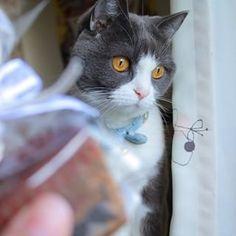 今年は作りました✌🏻️ #一眼レフ#Canon#ガトーショコラ#バレンタインデー#写真好きな人と繋がりたい#猫#愛猫 #ねこちゃんメインでチョコの歪さフォロー #そもそもあげる人いない