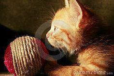Sweet little kitten with ball