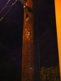 No ordinary power pole, they're watching!