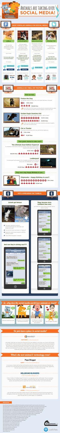 Los animales también en las Redes Sociales #infografia #infographic #socialmedia